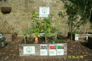 Incredible Edible_Rossendale