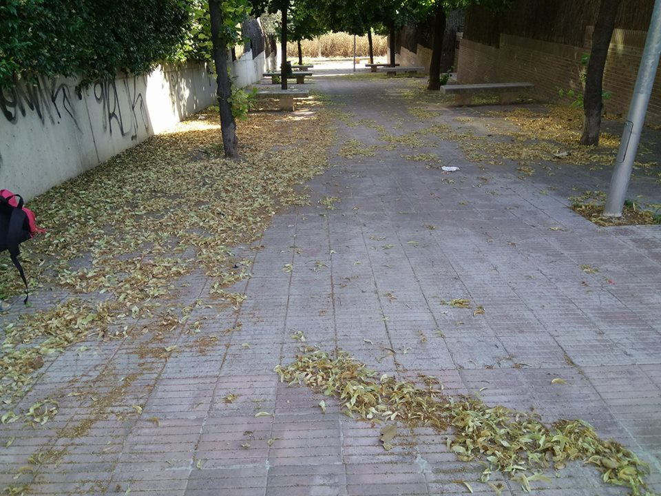 M.Madrid